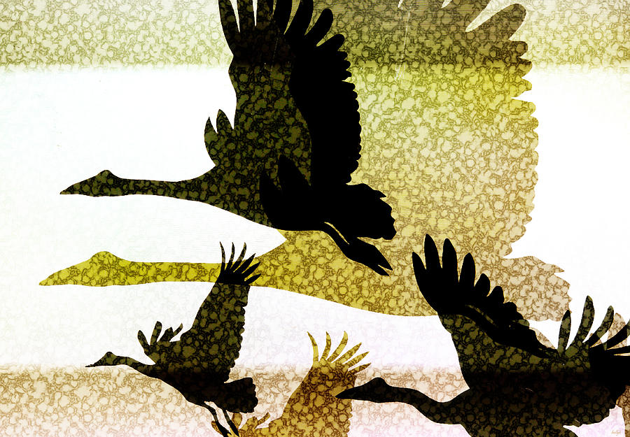 Magpie Geese In Flight Digital Art by Holly Kempe