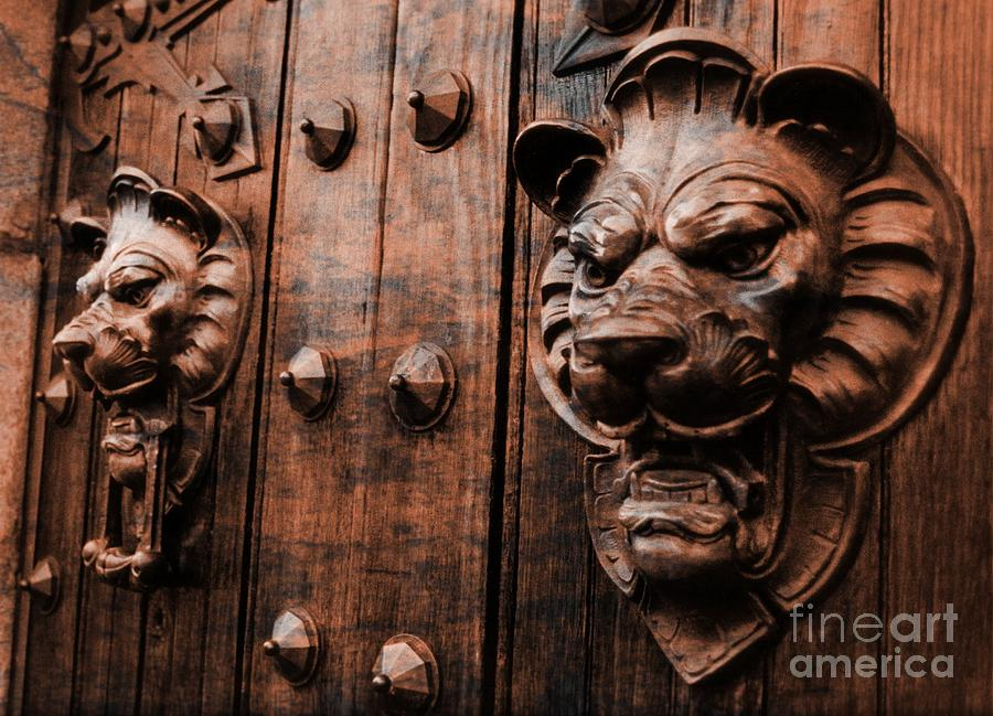 Lions Photograph - Mahogany Lion Heads by John Malone