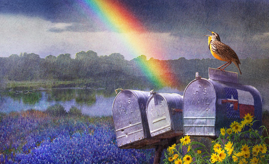 Mailboxes Bluebonnets And Meadowlark In Rainbow Painting by R christopher Vest