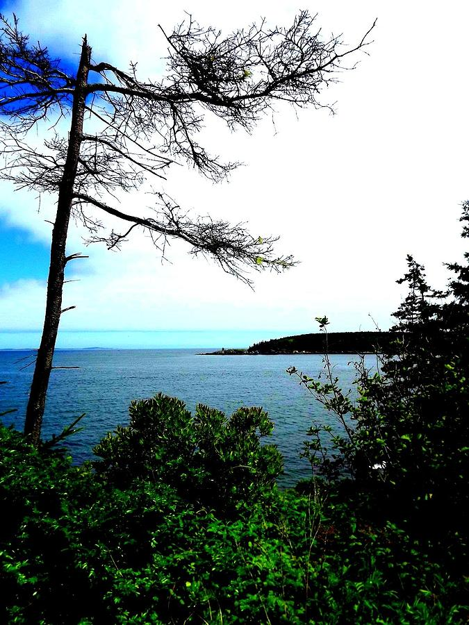 Landscape Photograph - Maine by Dancingfire Brenda Morrell