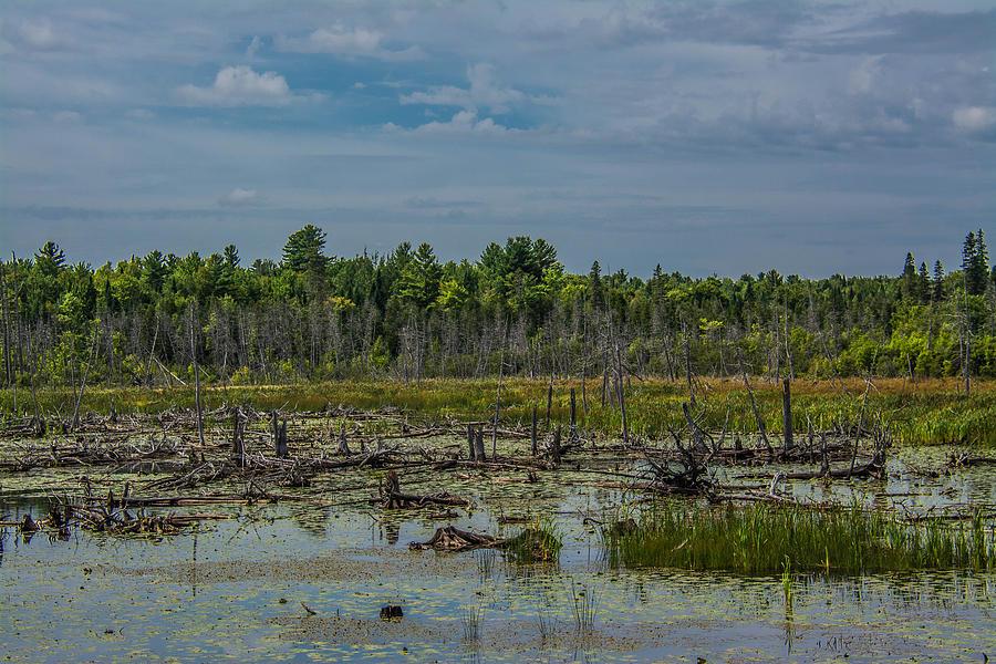 Marsh Photograph - Maine Marsh by Jason Brow