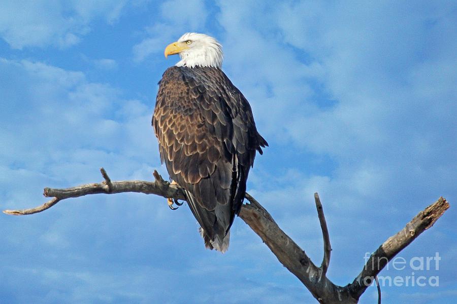 Colorado Photograph - Majestic by Bob Hislop
