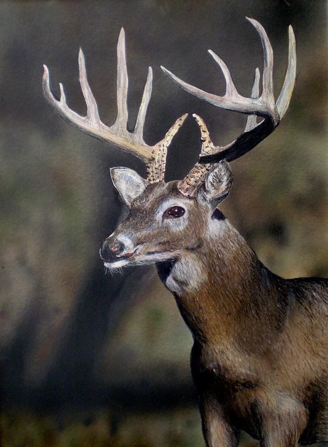 Wildlife Painting - Majestic Buck by Todd Spaur