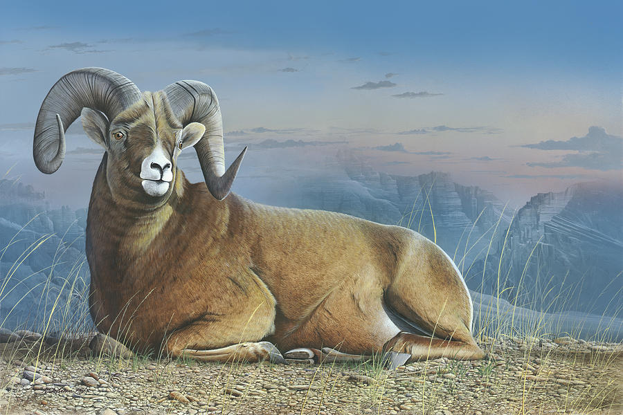 Bighorn Sheep Painting - Majestic by Mike Brown