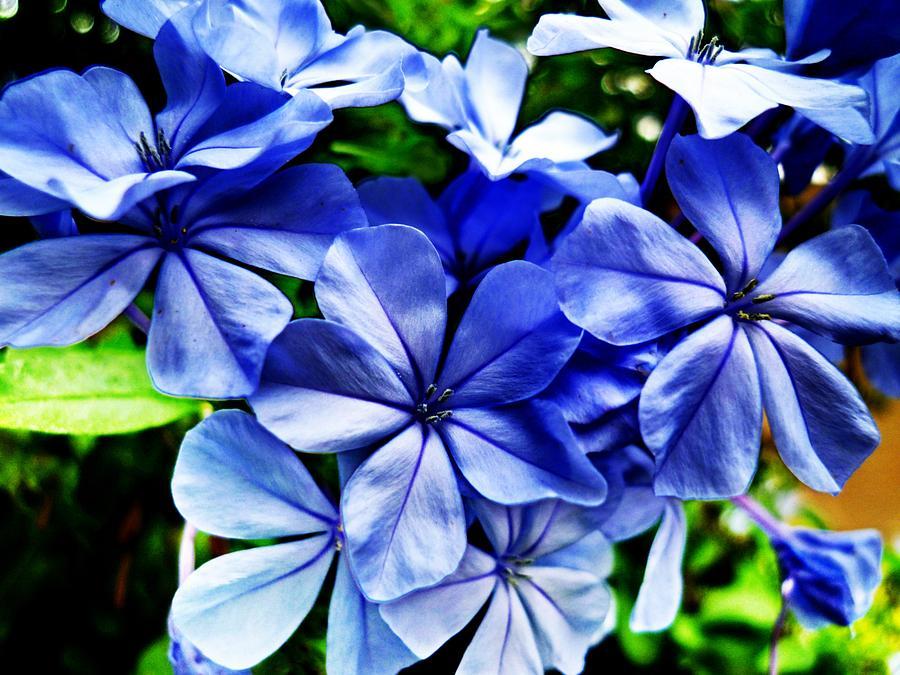 Flower Photograph - Make A Wish by Beto Machado