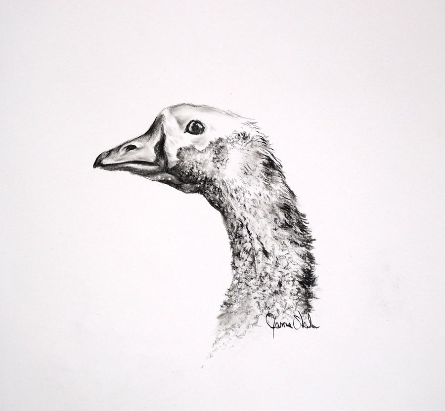 Wildlife Drawing Drawing - Make My Day by James Skiles