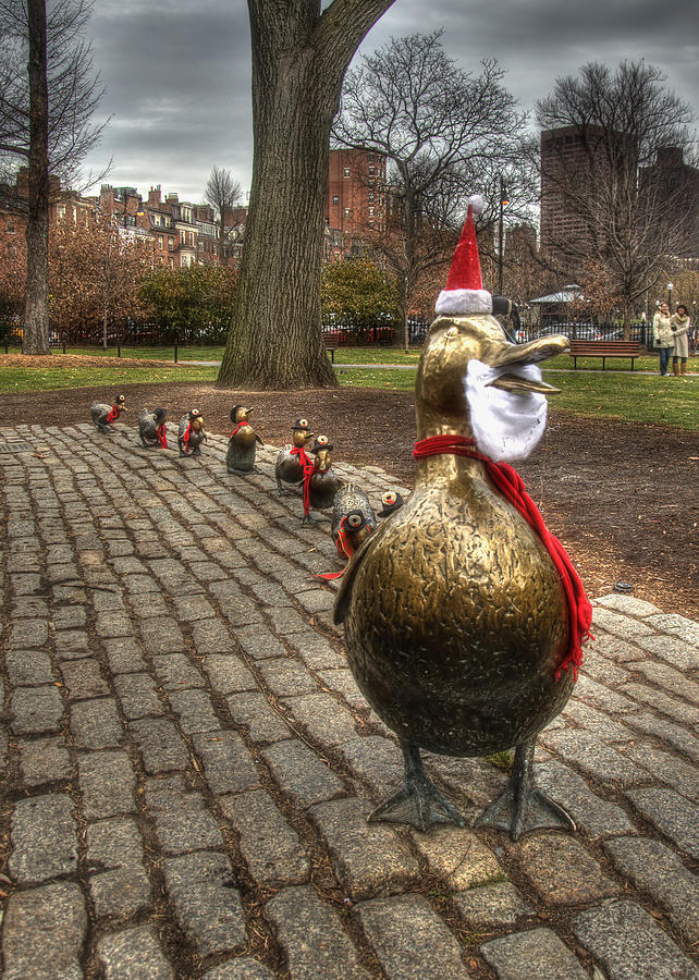 Make Way For Duckling Holiday Card 2 Photograph by Joann Vitali