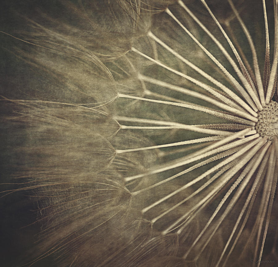 Dandelion Photograph - Making A Wish...  by Maria Angelica Maira