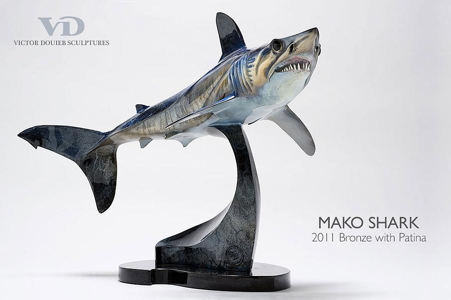 Mako Shark Drawings