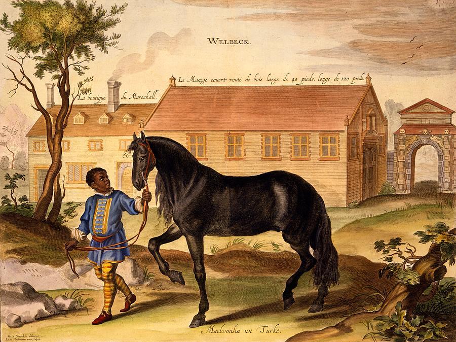 Horse Drawing - Makomilia, A Turk, Led By A Negro by Abraham Jansz. van Diepenbeke