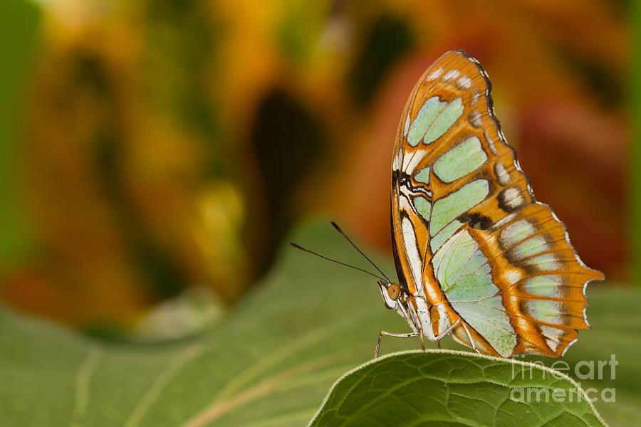 Malachite Photograph - Malachite by Bryan Keil