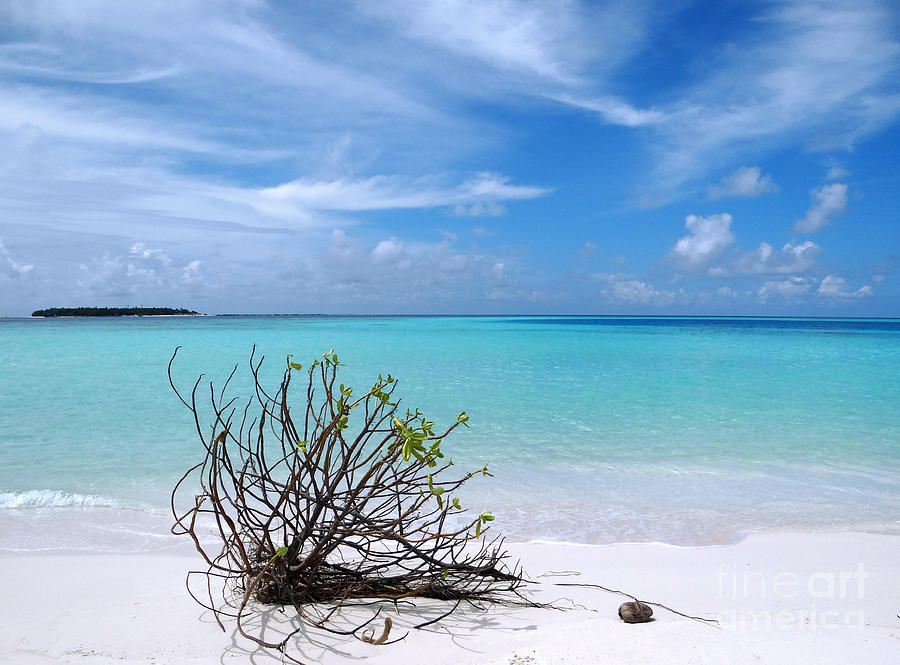 Maldives Photograph - Maldives 12 by Giorgio Darrigo