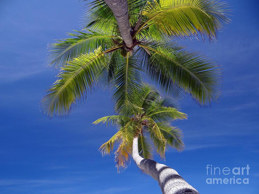 Spiaggia Photograph - Maldivian 10 by Giorgio Darrigo