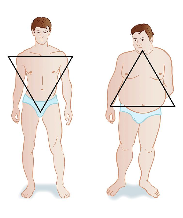 Male Body Shapes by Jeanette Engqvist