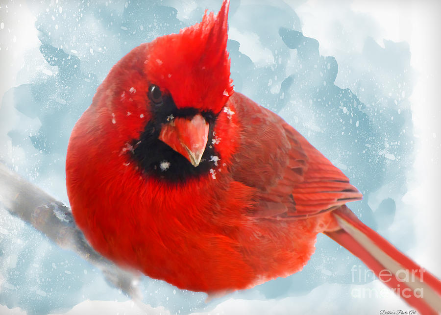 male cardinal on snow day dgital paint photograph by debbie portwood