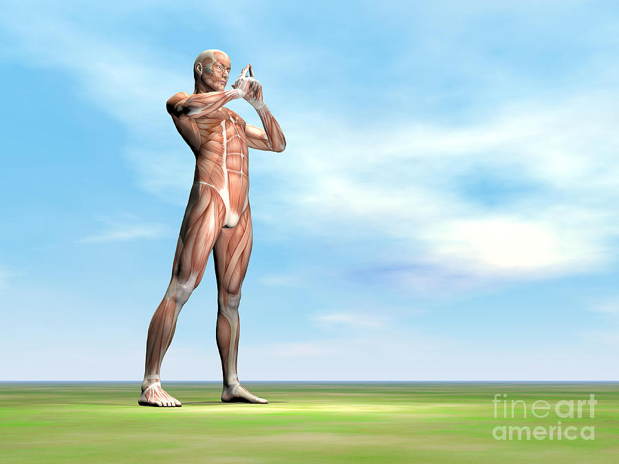 Peaceful Digital Art - Male Musculature Standing On The Green by Elena Duvernay