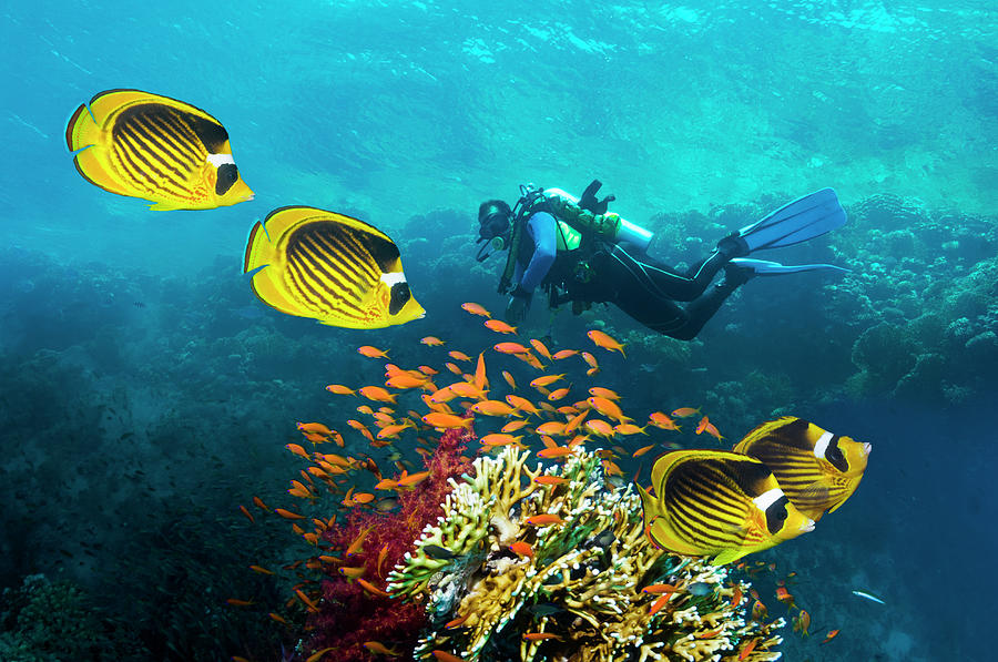 Male Scuba Diver Over Coral Reef Photograph by Georgette Douwma