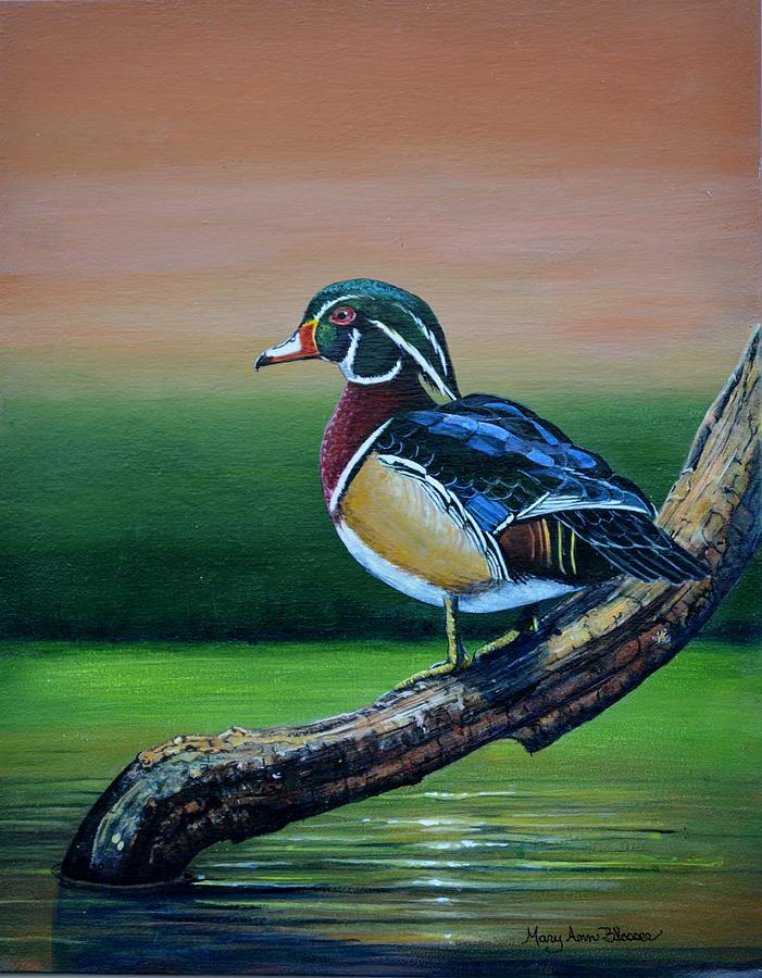 Duck Painting - Male Wood Duck by Mary ann Blosser