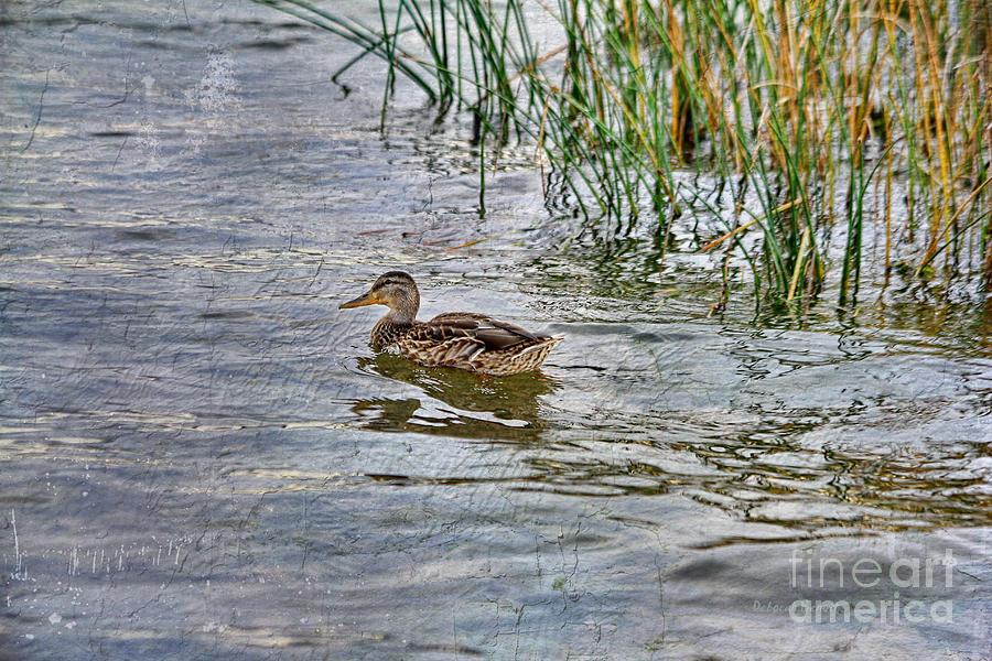 Mallard Photograph - Mallard By The Reeds by Deborah Benoit