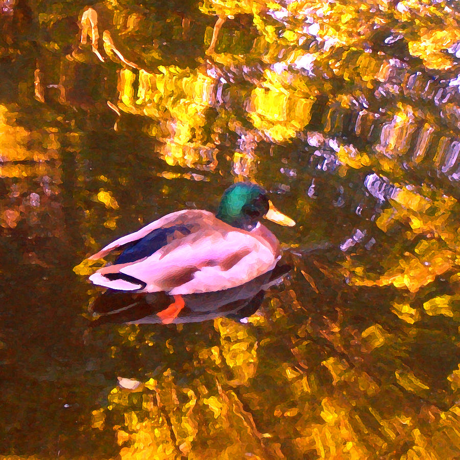 Landscapes Photograph - Mallard Duck On Pond 1 by Amy Vangsgard