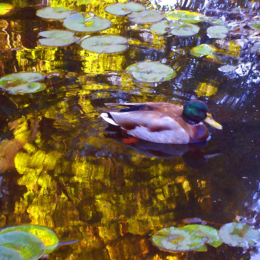 Landscapes Painting - Mallard Duck On Pond 2 by Amy Vangsgard