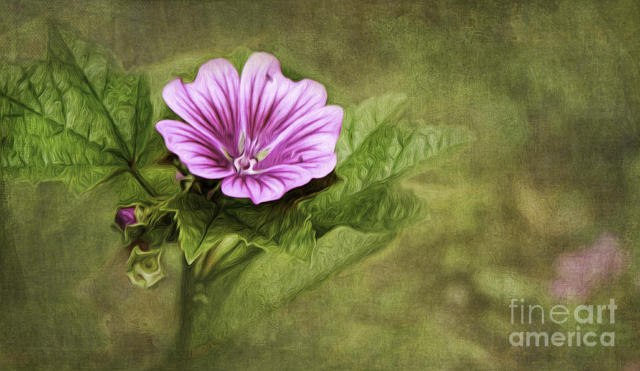 Mallow Photograph - Mallow Hollyhock by Lena Auxier