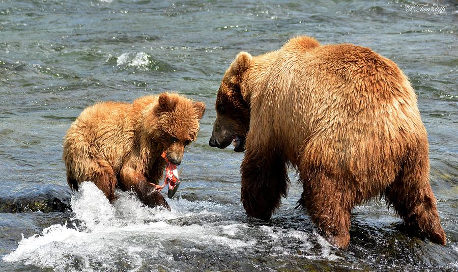 Mama Photograph - Mama And Baby Grizzly Bear At The Falls by Patricia Twardzik