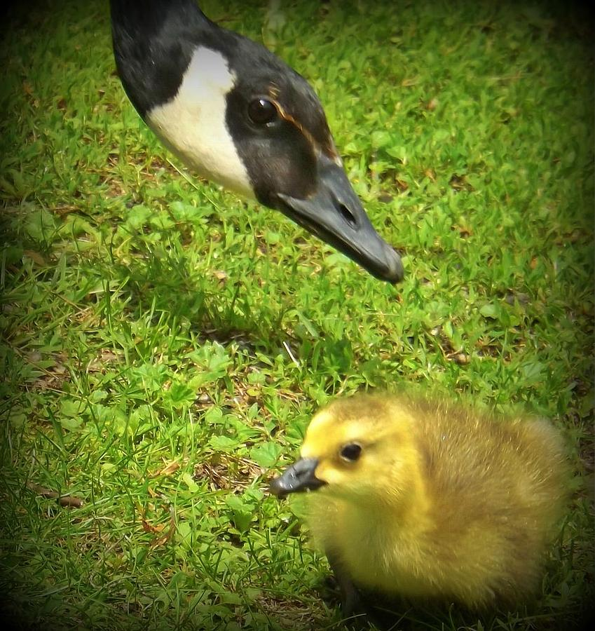 Birds Photograph - Mama Checking In by Samantha Radermacher