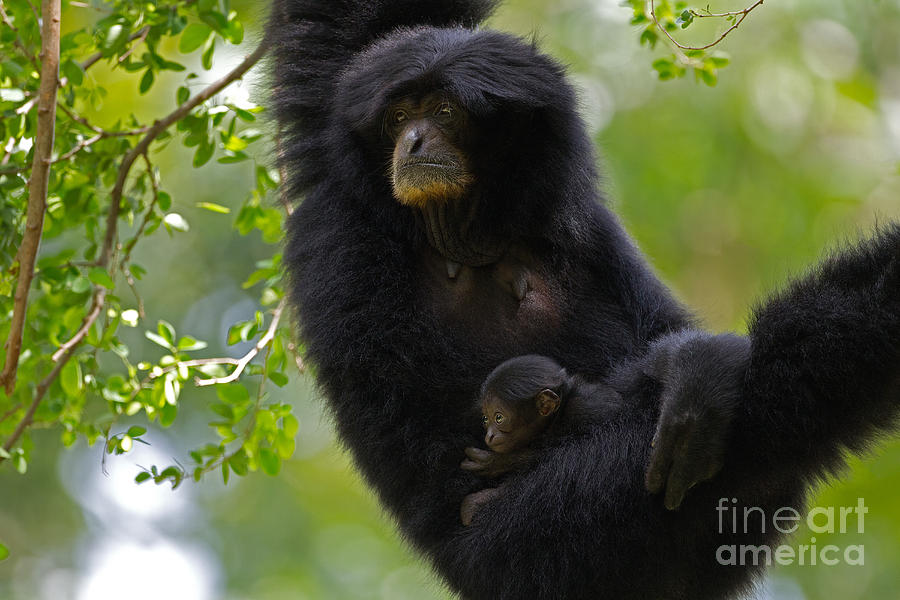 Adorable Photograph - Mamas Hammock by Ashley Vincent