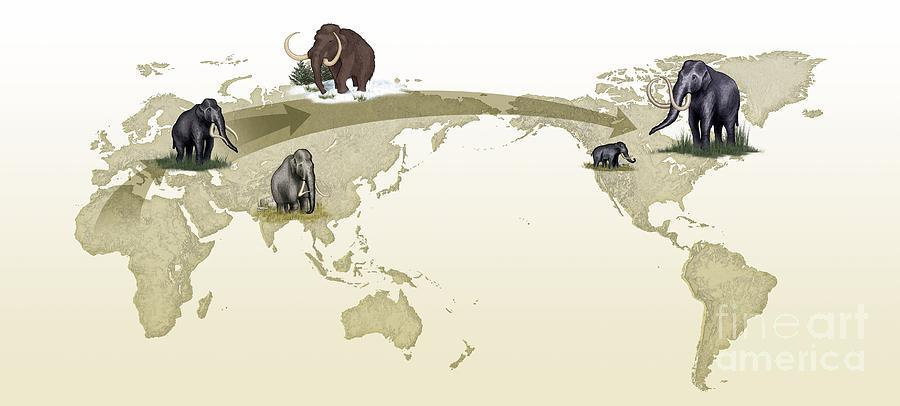 Animal Photograph - Mammoth Evolutionary Migration by Spl