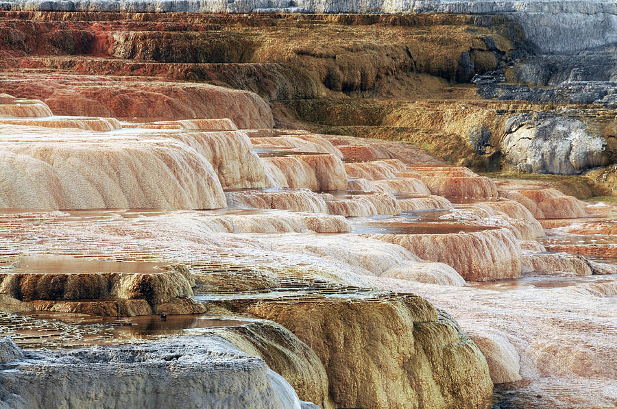 Bacterial Photograph - Mammoth Hot Springs Terracaes by Michel Hersen