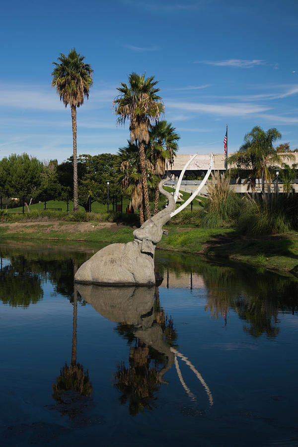 Vertical Photograph - Mammoth Sculpture In A Pool, La Brea by Animal Images