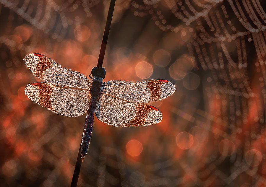 Dragonfly Photograph - Man In Red by Anton Van Dongen