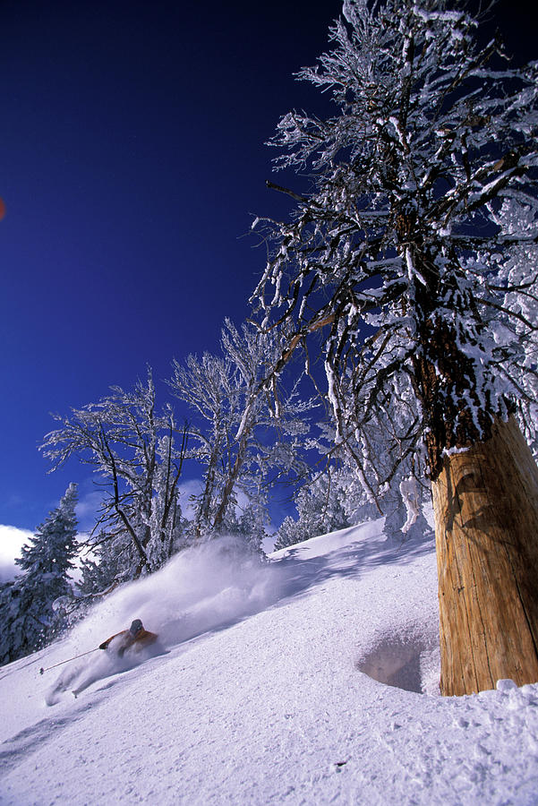 Action Photograph - Man Skiing Through Trees In Fresh by Corey Rich