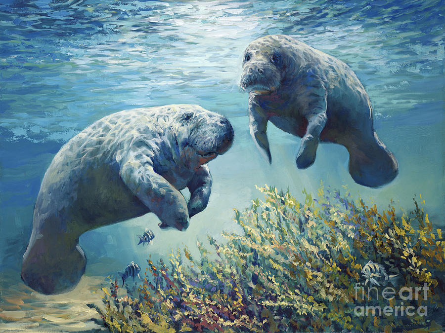 Manatees Painting   Manatees By Laurie Hein