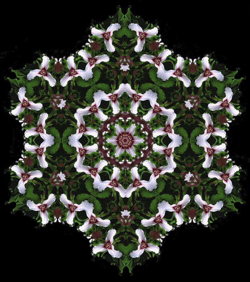 Mandala Digital Art - Mandala Trillium Holiday by Nancy Griswold