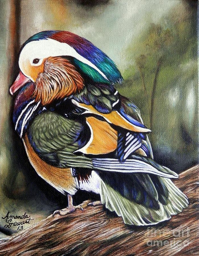 Mandarin Duck Painting - Mandarin Duck by Amanda Hukill