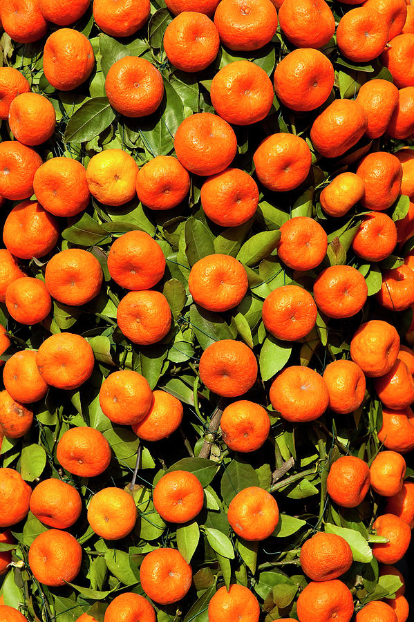 Mandarin Tree For Sale At Chinese New Photograph by Richard Ianson