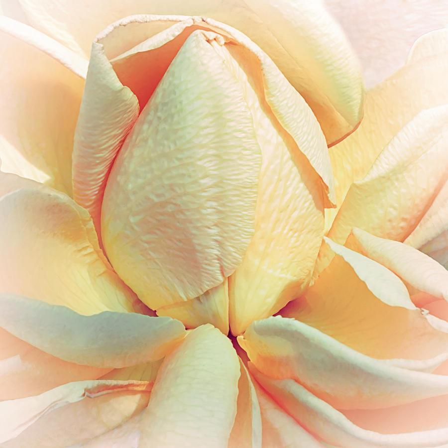 Floral Photograph - Mango Smoothie by Darlene Kwiatkowski