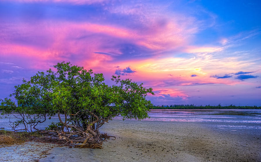 Mangrove Photograph - Mangrove By The Bay by Marvin Spates