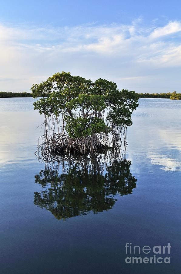 Florida Photograph - Mangrove Island by Andres LaBrada