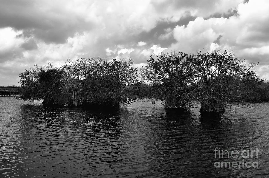 Mangrove Photograph - Mangrove Islands by Andres LaBrada