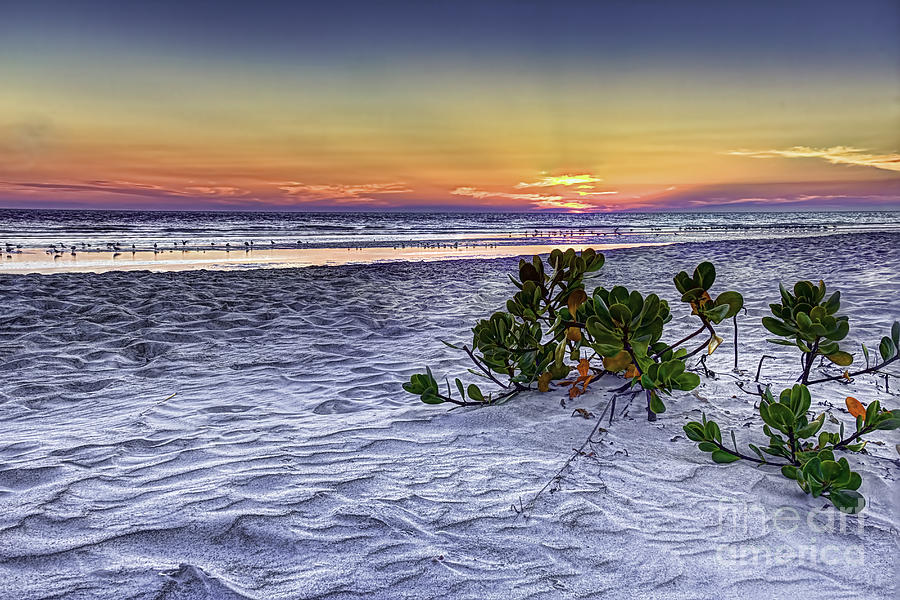 Florida Mangroves Photograph - Mangrove On The Beach by Marvin Spates