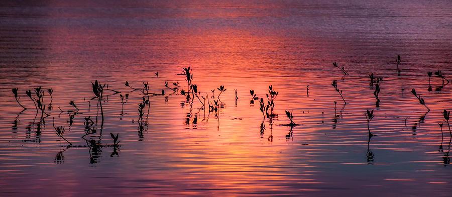 Mangroves Photograph - Mangrove Paradise by Karen Wiles