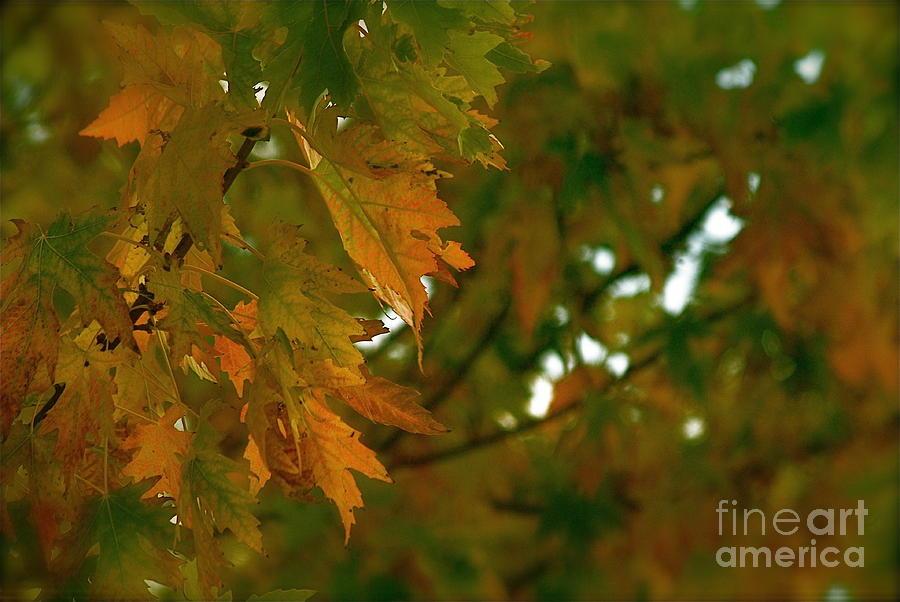 Manhattan Photograph - Manhattan Fall by Photography by Tiwago