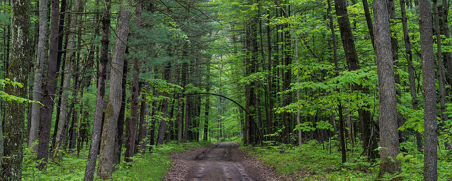 Tree Photograph - Manistee National Forest Michigan by Steve Gadomski