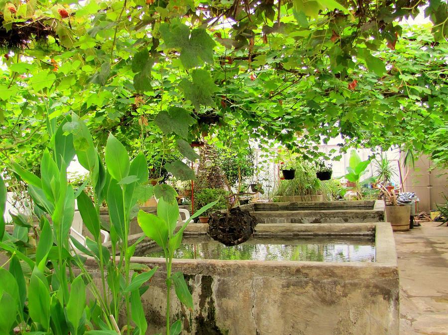 Manley Hot Springs Photograph - Manley Hot Springs by Lisa Dunn
