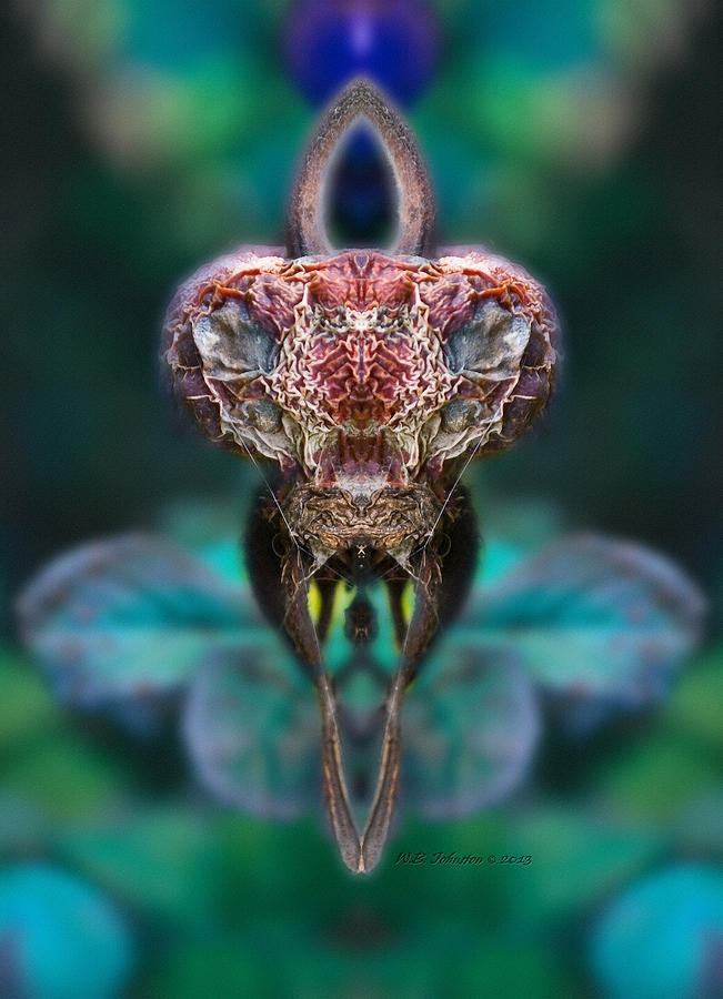 Abstract Photograph - Mantis by WB Johnston
