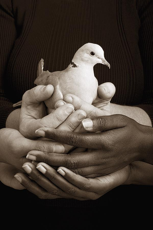 Teamwork Photograph - Many Hands Holding A Dove by Ron Nickel