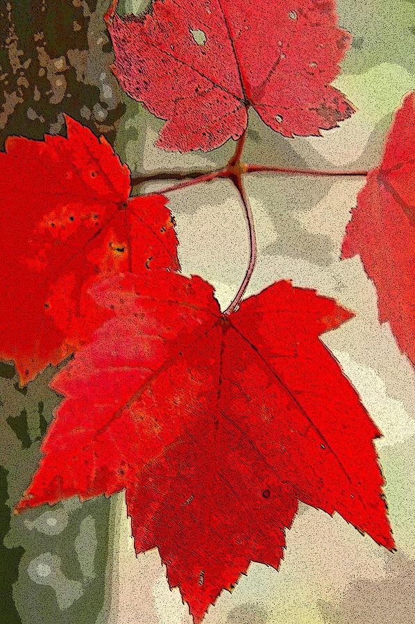 Maple Leaf Display by Rob Huntley